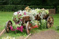 Необычные цветы для вашего цветника